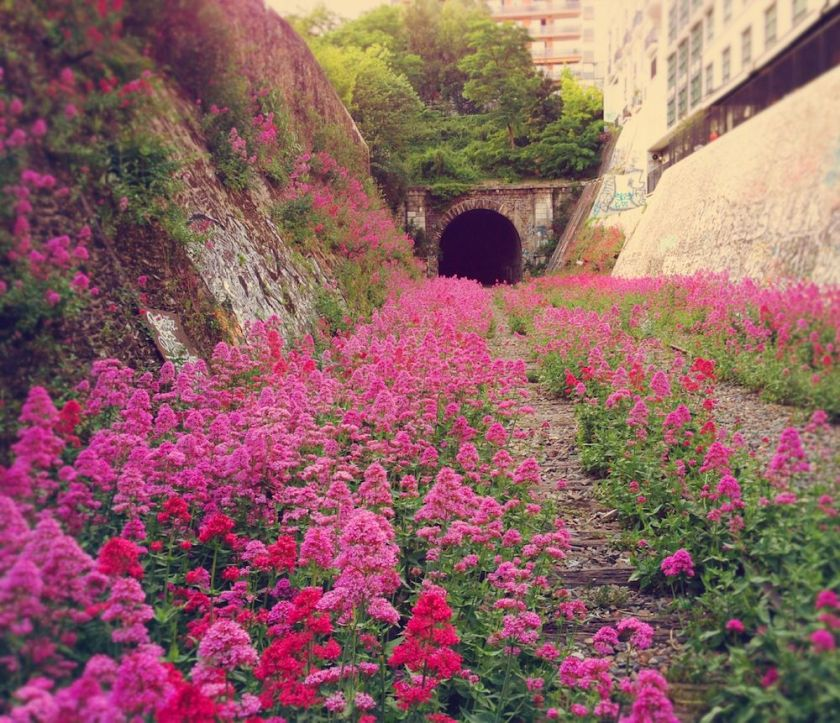 A photo taken by Vanessa Grall of the abandoned Paris railway in one of her most popular articles. Courtesy Messy Nessy Chic.  http://www.messynessychic.com/2013/06/17/a-walk-along-the-paris-inner-city-railway-abandoned-since-1934/
