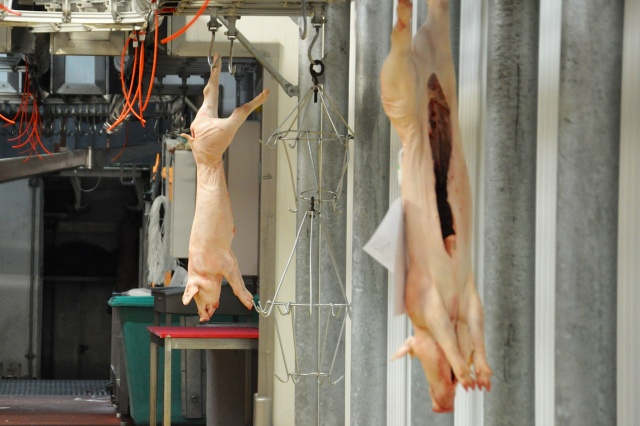 Pigs hung on hook II